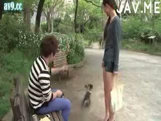 realita, japonec, kotě