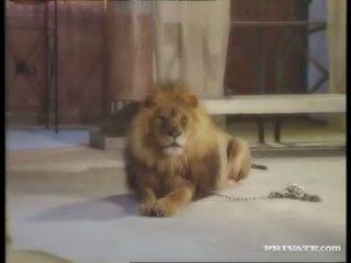 ดำ widow, the roman และ the lion